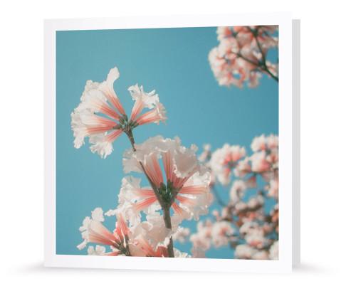 Grußkarte - Frühlingsboten