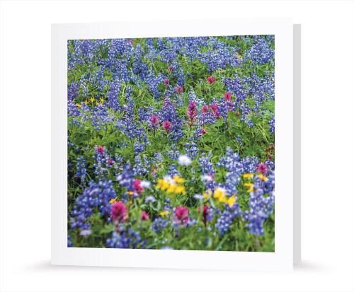Grußkarte - Blumenwiese